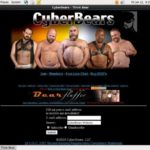 Cyberbears.com Picture
